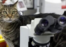 מחלת שריטת החתול