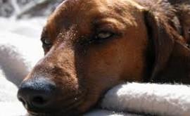 אפילפסיה בכלבים