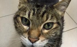 סימני זיקנה אצל חתולים