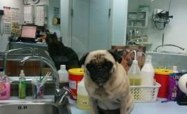 תכנית בריאות לכלבים