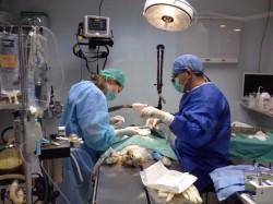 ניתוחי לייזר בחיות מחמד
