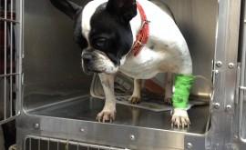 לימפומה בכלבים - שוקה בירן