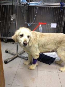 אבנים בדרכי השתן בכלבים