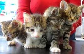 דלקת עיניים בחתולים