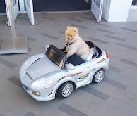 איך לנסוע ברכב עם כלב