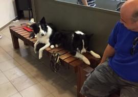 רגישות לתרופות בכלבים