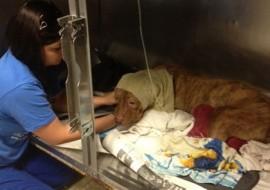 מכת חום בכלבים